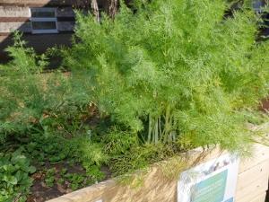 Yadkin County Community Garden